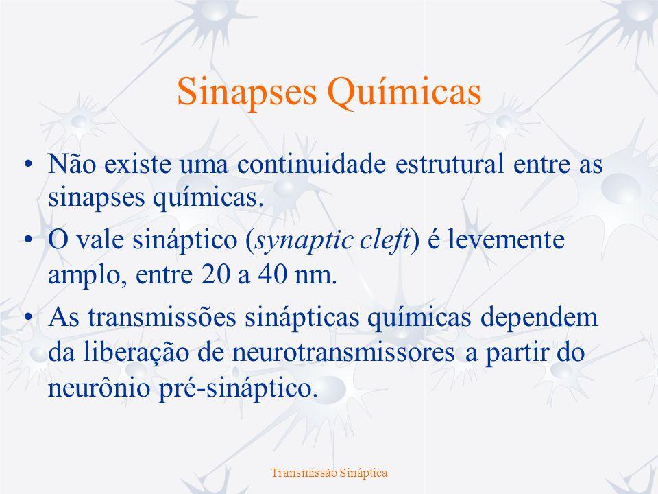 Transmissão Sináptica Sinapses Químicas Não existe uma continuidade estrutural entre as sinapses químicas. O vale sináptico (synaptic cleft) é levemen