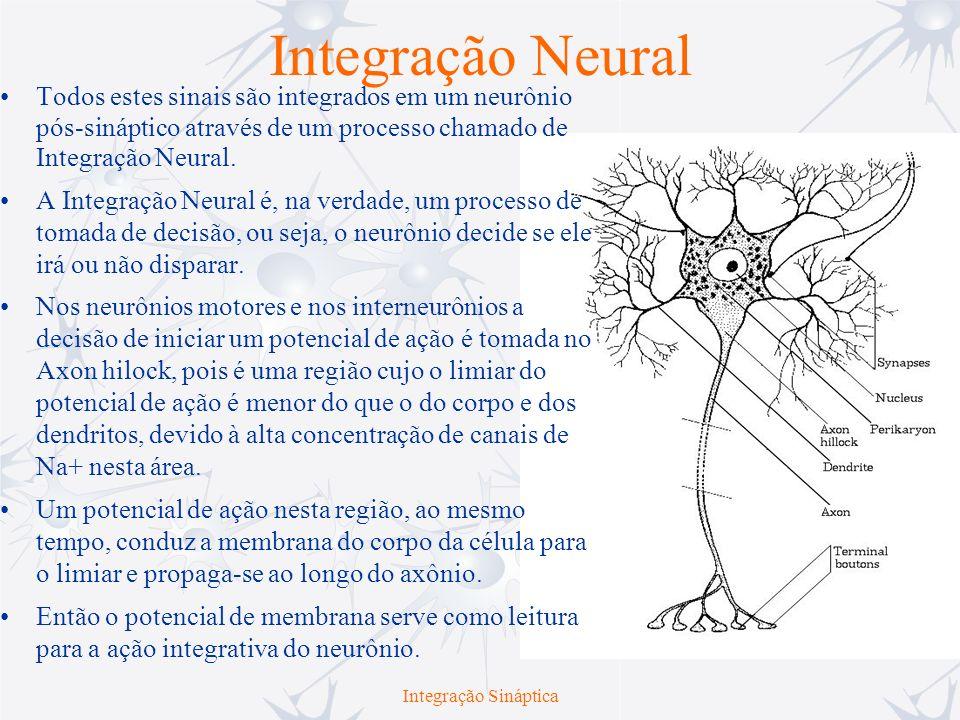 Integração Neural Todos estes sinais são integrados em um neurônio pós-sináptico através de um processo chamado de Integração Neural. A Integração Neu
