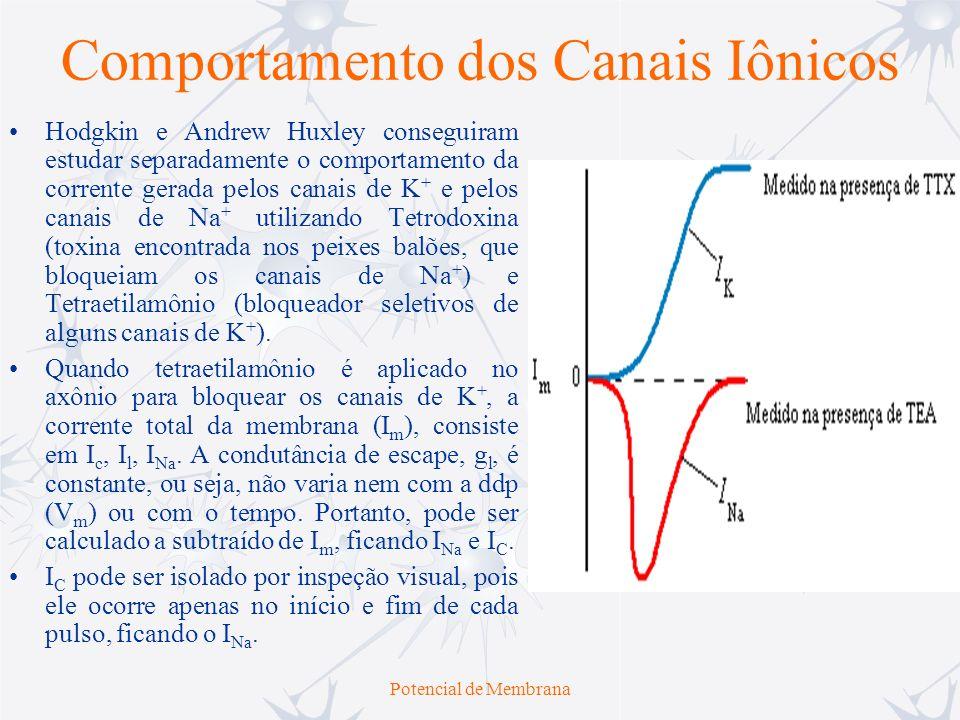 Potencial de Membrana Comportamento dos Canais Iônicos Hodgkin e Andrew Huxley conseguiram estudar separadamente o comportamento da corrente gerada pe