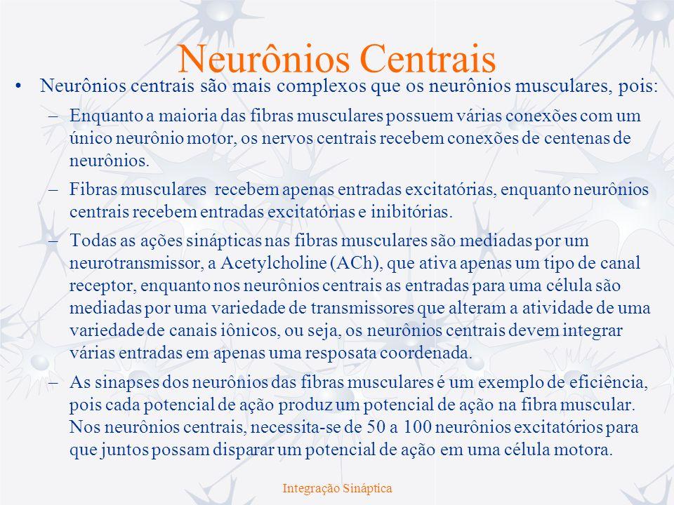 Integração Sináptica Neurônios Centrais Neurônios centrais são mais complexos que os neurônios musculares, pois: –Enquanto a maioria das fibras muscul