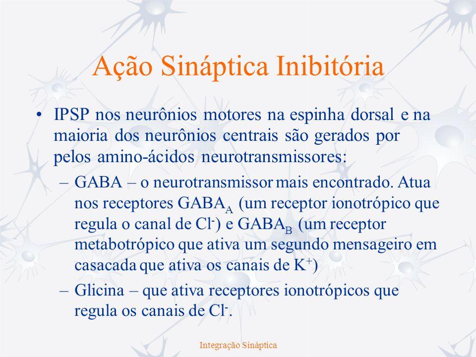 Ação Sináptica Inibitória IPSP nos neurônios motores na espinha dorsal e na maioria dos neurônios centrais são gerados por pelos amino-ácidos neurotra