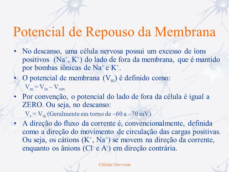 Células Nervosas Potencial de Repouso da Membrana No descanso, uma célula nervosa possui um excesso de íons positivos (Na +, K + ) do lado de fora da