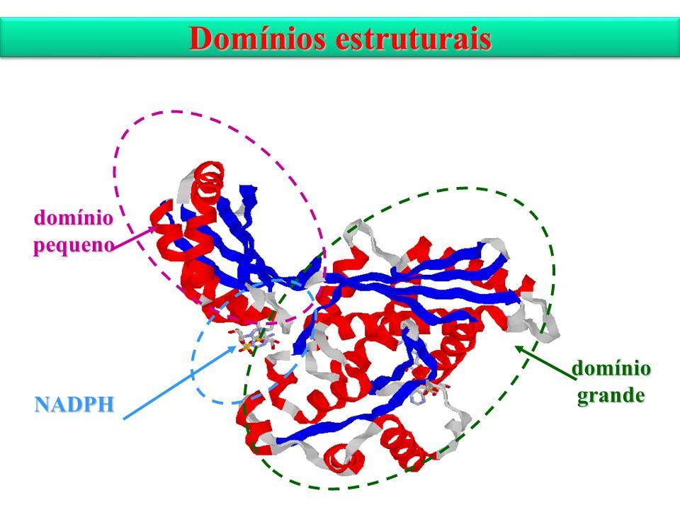 Domínios estruturais NADPH domíniopequeno domíniogrande
