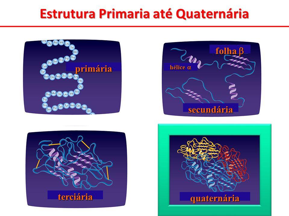 quaternária Estrutura Primaria até Quaternária primária secundária folha folha hélice hélice terciária