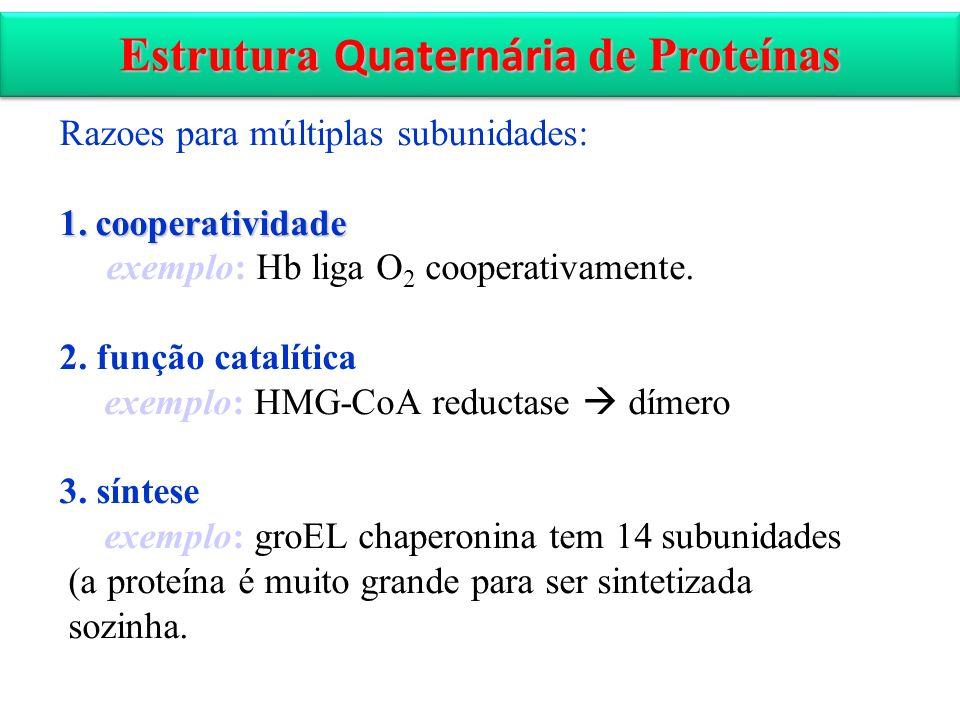 Estrutura Quaternária de Proteínas Razoes para múltiplas subunidades: 1.cooperatividade exemplo: Hb liga O 2 cooperativamente. 2. função catalítica ex