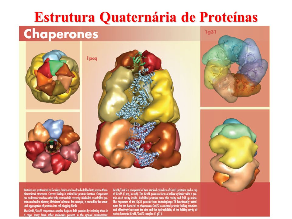 Estrutura Quaternária de Proteínas
