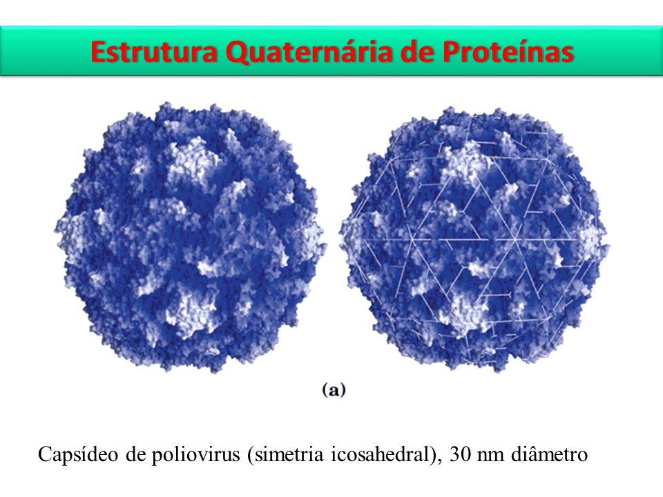 Capsídeo de poliovirus (simetria icosahedral), 30 nm diâmetro Estrutura Quaternária de ProteínasEstrutura Quaternária de Proteínas