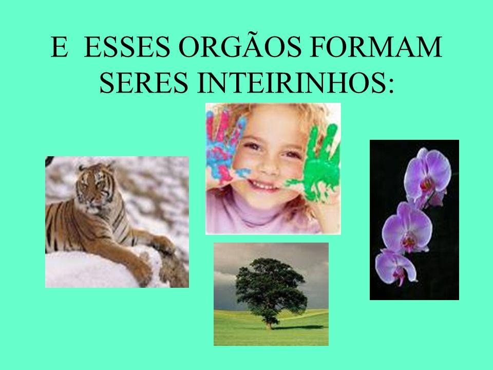 E ESSES ORGÃOS FORMAM SERES INTEIRINHOS: