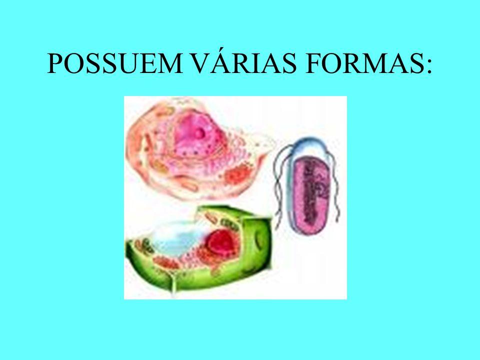 POSSUEM VÁRIAS FORMAS: