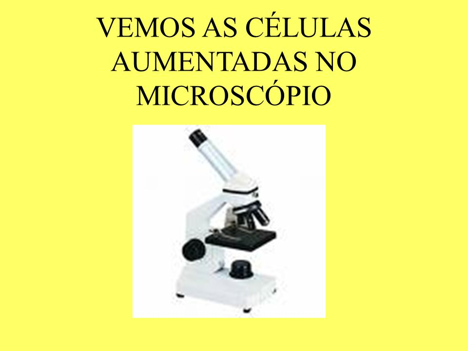 VEMOS AS CÉLULAS AUMENTADAS NO MICROSCÓPIO