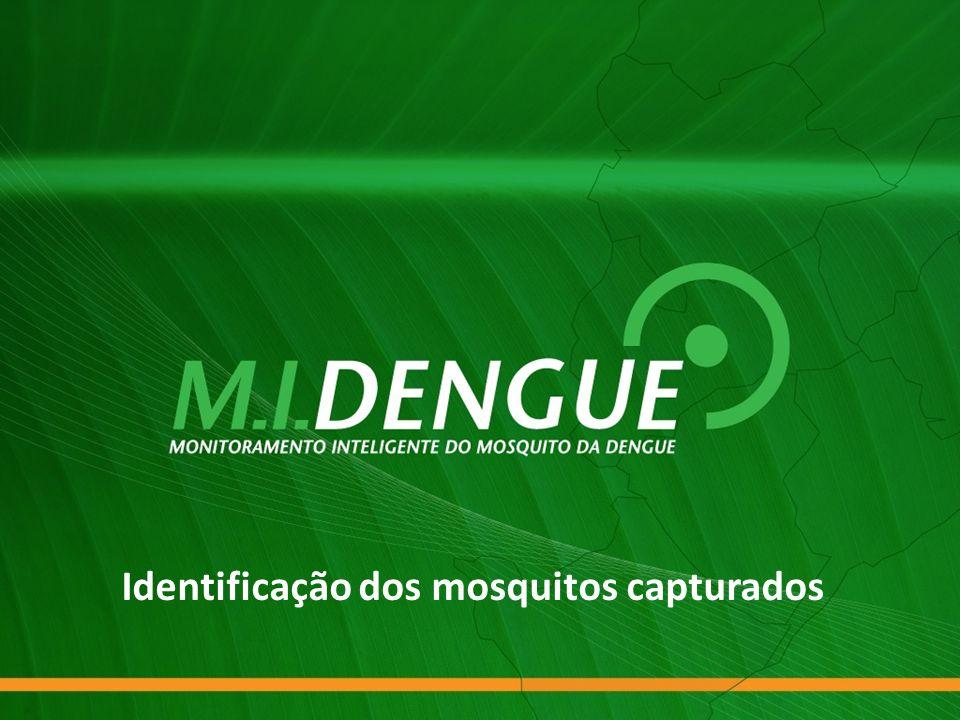 Identificação dos mosquitos capturados