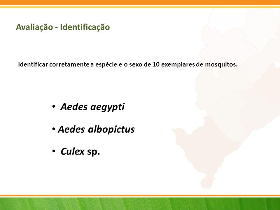 Avaliação - Identificação Aedes aegypti Aedes albopictus Culex sp.