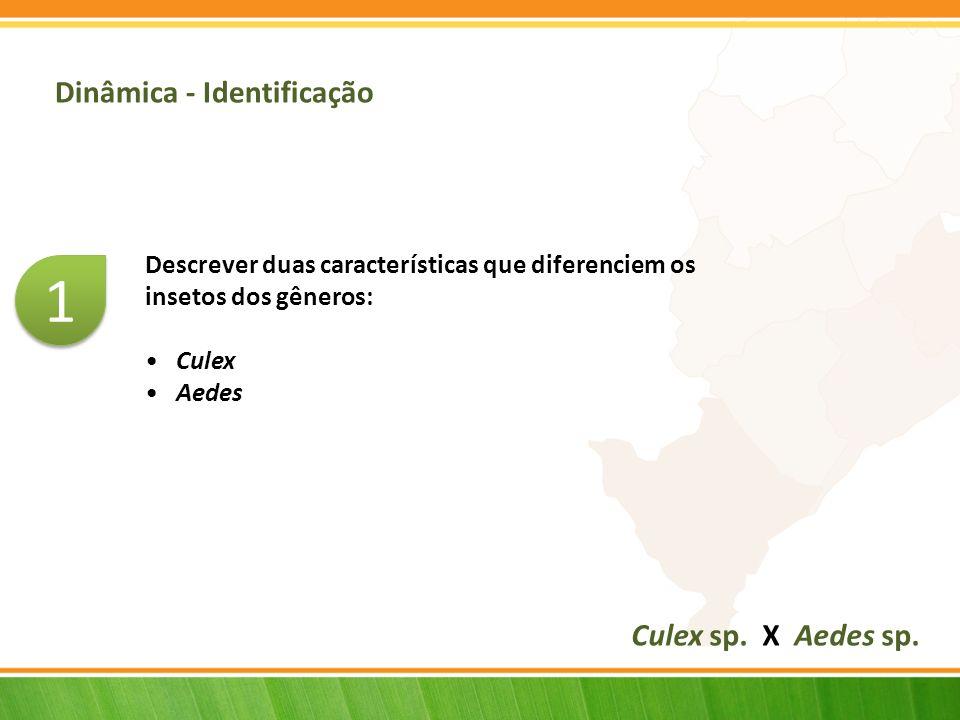 Dinâmica - Identificação Descrever duas características que diferenciem os insetos dos gêneros: Culex Aedes Culex sp.