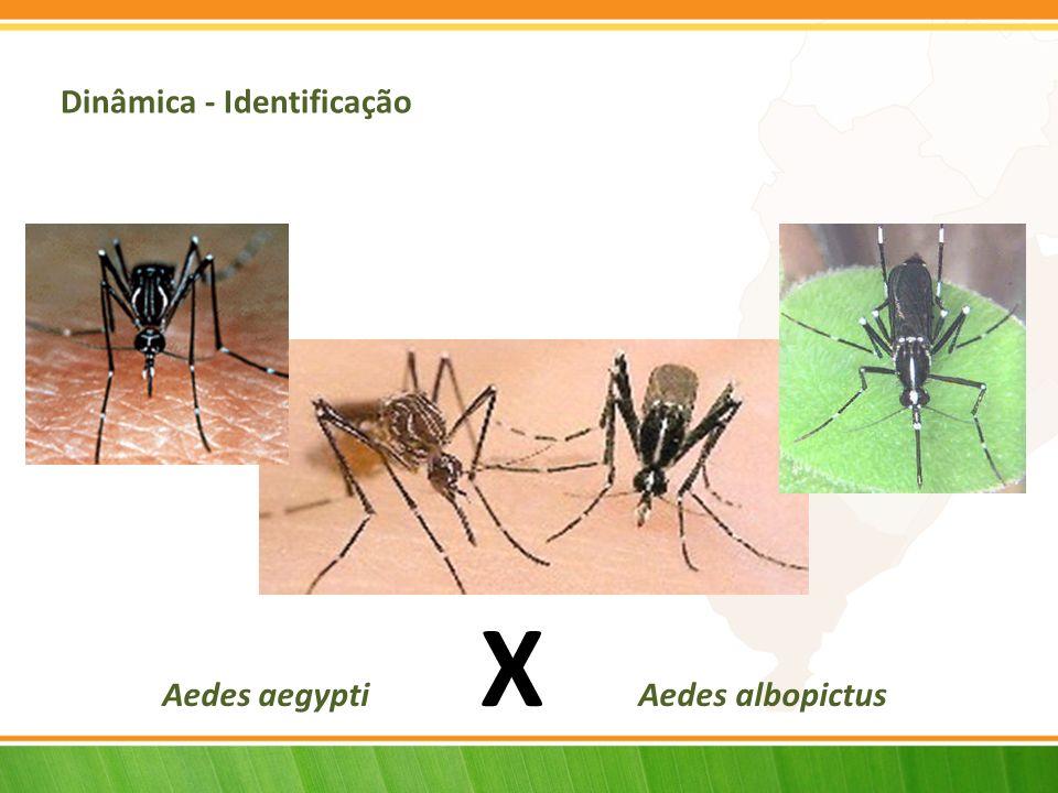 Dinâmica - Identificação Aedes aegypti X Aedes albopictus