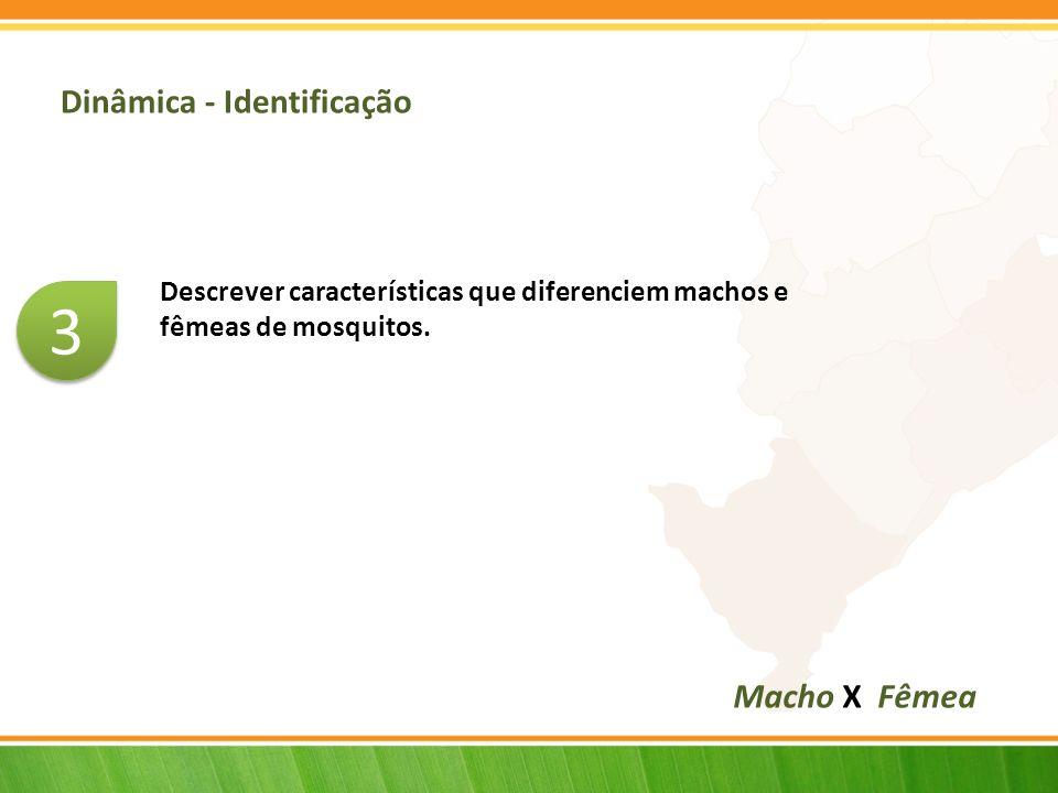 Dinâmica - Identificação Descrever características que diferenciem machos e fêmeas de mosquitos.