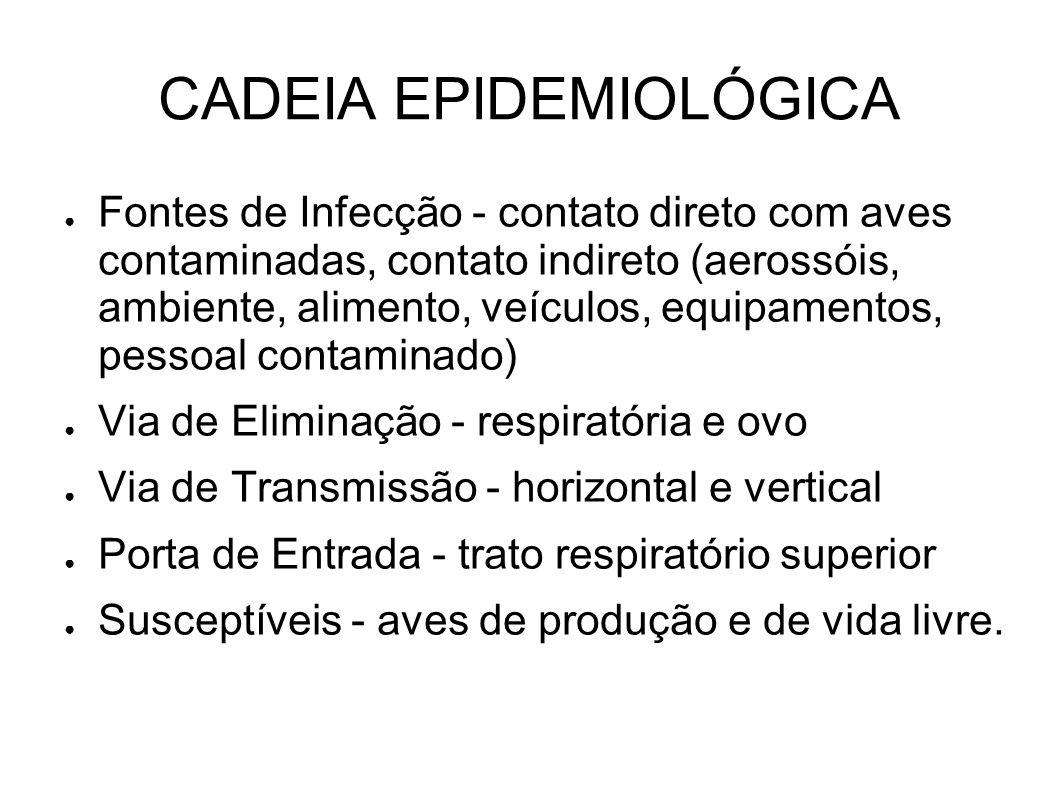 CADEIA EPIDEMIOLÓGICA Fontes de Infecção - contato direto com aves contaminadas, contato indireto (aerossóis, ambiente, alimento, veículos, equipament