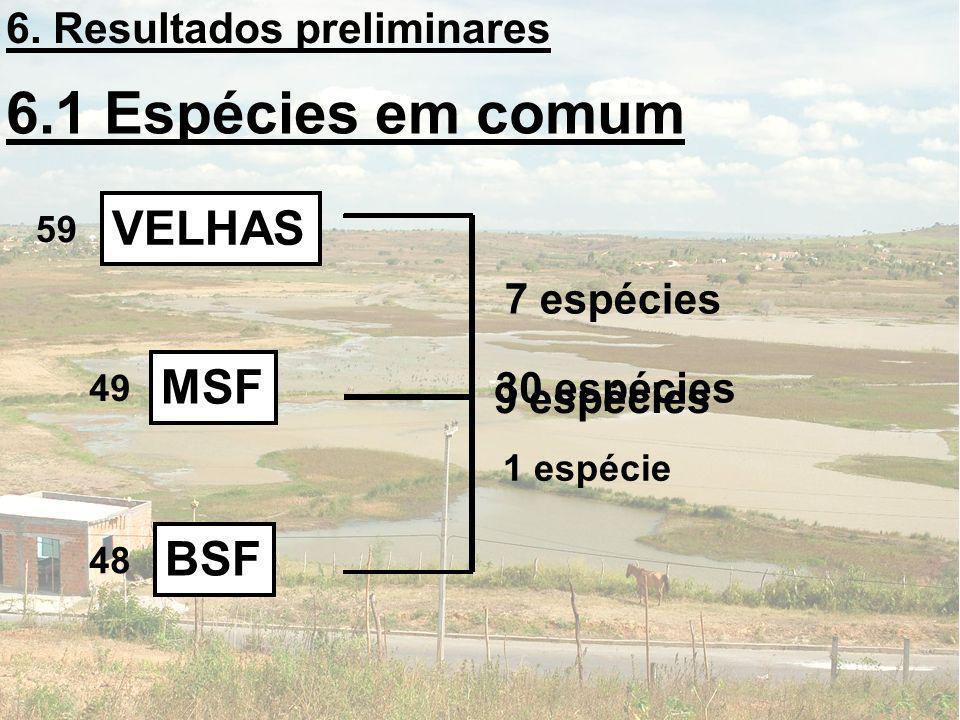 6.1 Espécies em comum VELHAS BSF MSF 30 espécies 7 espécies 9 espécies 1 espécie 6. Resultados preliminares 59 49 48