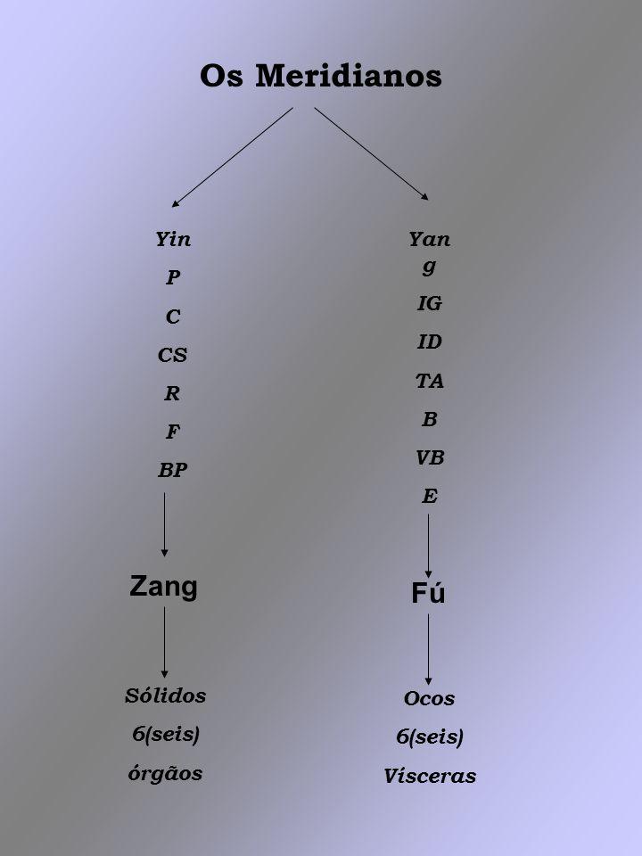 Os Meridianos Yin P C CS R F BP Zang Sólidos 6(seis) órgãos Yan g IG ID TA B VB E Fú Ocos 6(seis) Vísceras