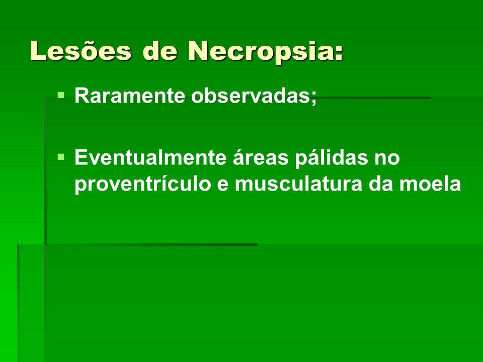 Lesões de Necropsia: Raramente observadas; Eventualmente áreas pálidas no proventrículo e musculatura da moela