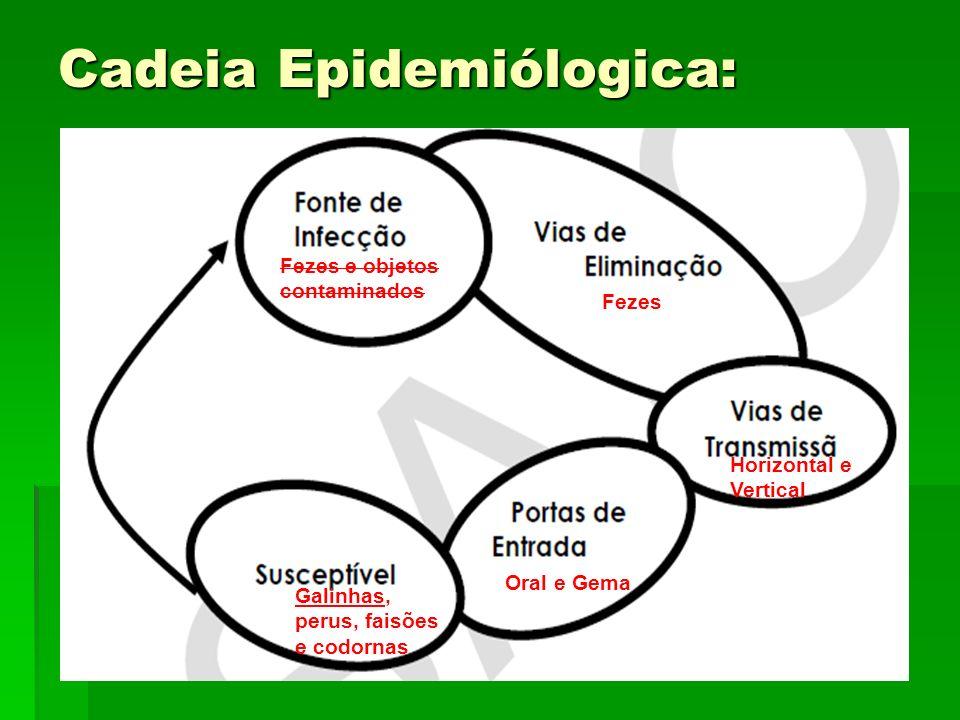 Cadeia Epidemiólogica: Fezes e objetos contaminados Fezes Horizontal e Vertical Oral e Gema Galinhas, perus, faisões e codornas