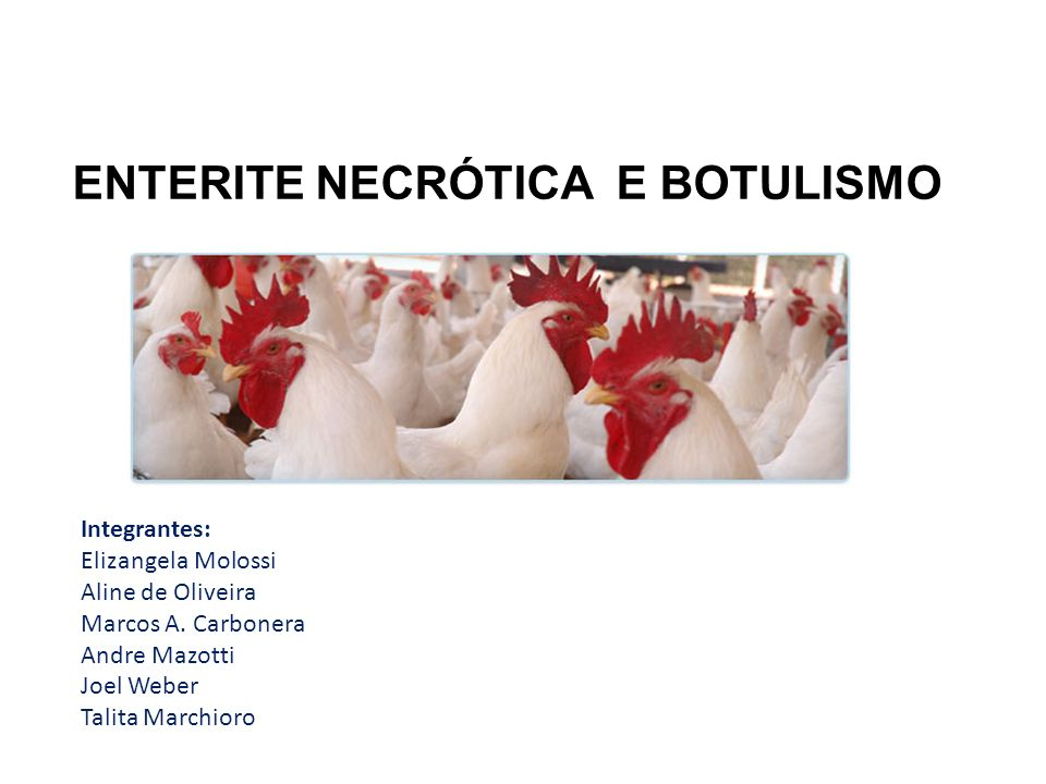Enterite necrótica / Botulismo CONCEITO: Enterite necrótica: doença infecciosa caracterizada por proliferação aguda ao nível de intestino, com inflamação e necrose decorrente a ação da toxina bacteriana.