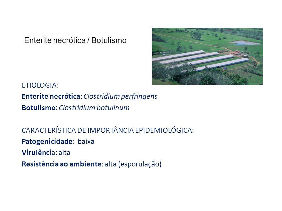 Enterite necrótica / Botulismo ETIOLOGIA: Enterite necrótica: Clostridium perfringens Botulismo: Clostridium botulinum CARACTERÍSTICA DE IMPORTÂNCIA E