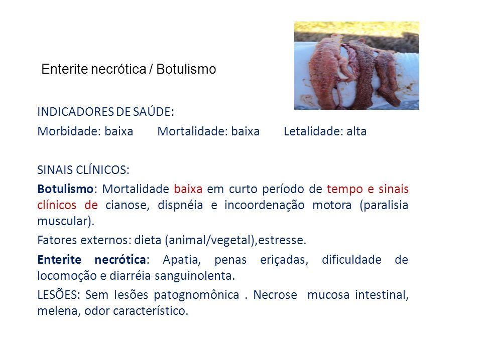 Enterite necrótica / Botulismo INDICADORES DE SAÚDE: Morbidade: baixa Mortalidade: baixa Letalidade: alta SINAIS CLÍNICOS: Botulismo: Mortalidade baix