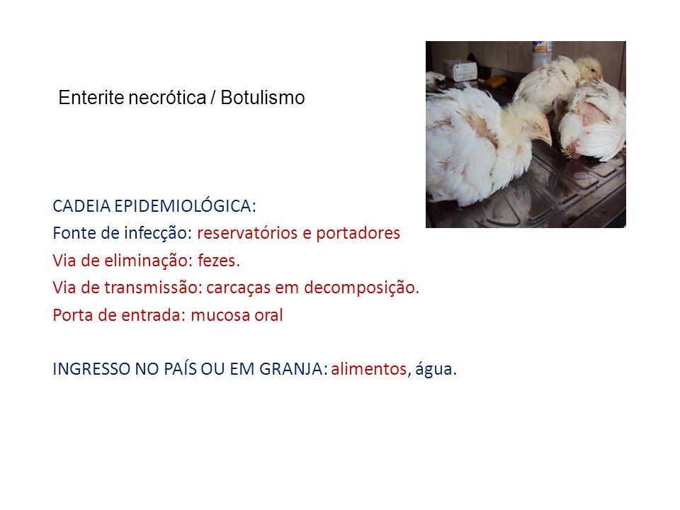 Enterite necrótica / Botulismo CADEIA EPIDEMIOLÓGICA: Fonte de infecção: reservatórios e portadores Via de eliminação: fezes. Via de transmissão: carc