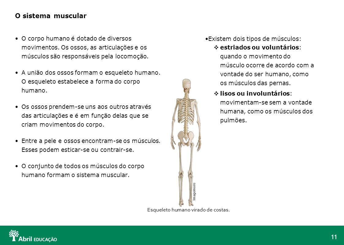 11 O sistema muscular O corpo humano é dotado de diversos movimentos. Os ossos, as articulações e os músculos são responsáveis pela locomoção. A união