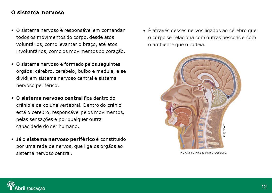 12 É através desses nervos ligados ao cérebro que o corpo se relaciona com outras pessoas e com o ambiente que o rodeia. No crânio localiza-se o céreb