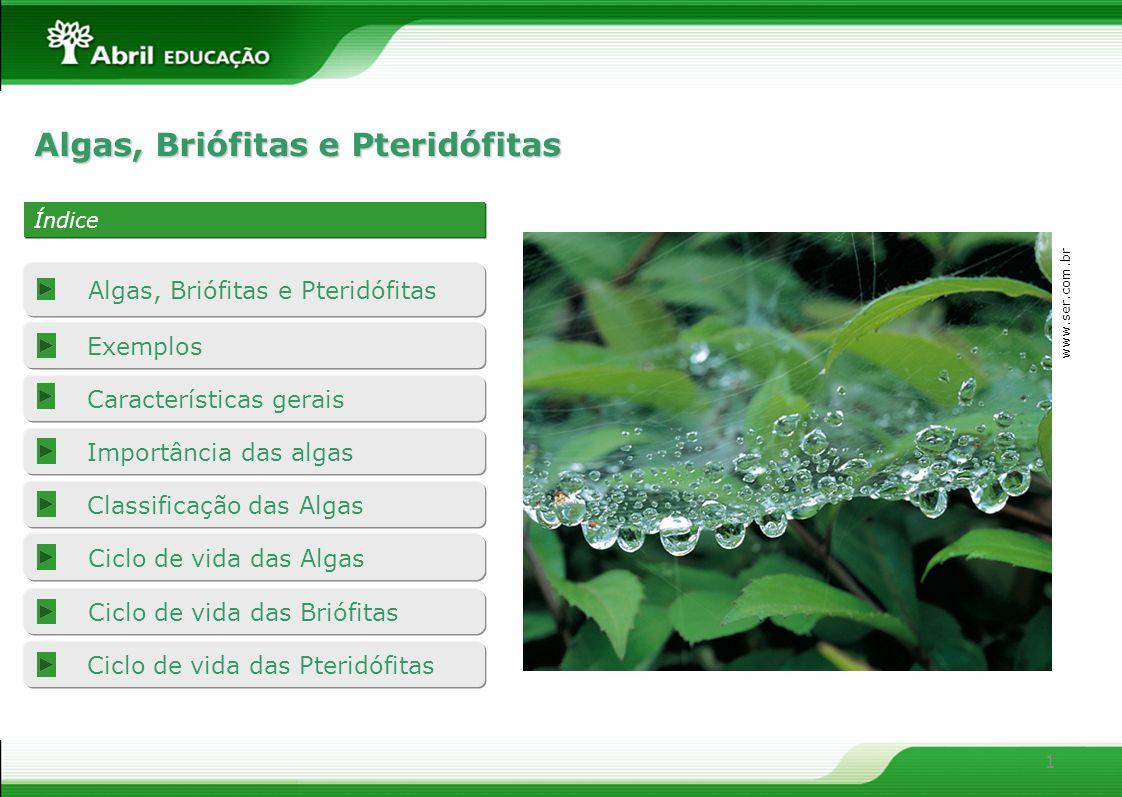 1 Características gerais Importância das algas Classificação das Algas Ciclo de vida das Pteridófitas Ciclo de vida das Briófitas Algas, Briófitas e P