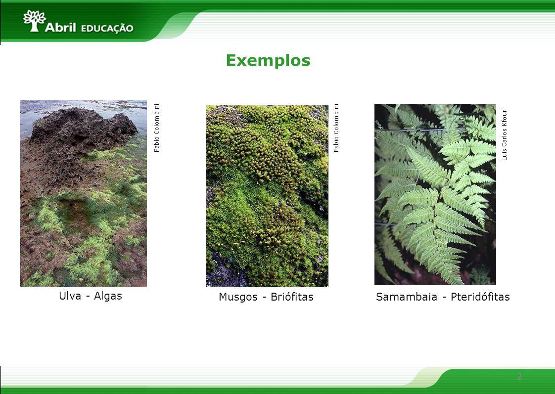 2 Samambaia - Pteridófitas Musgos - Briófitas Ulva - Algas Exemplos Fabio Colombini Luis Carlos Kfouri Fabio Colombini
