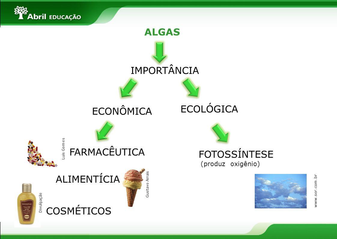 ALGAS IMPORTÂNCIA ECOLÓGICA ECONÔMICA FARMACÊUTICA ALIMENTÍCIA COSMÉTICOS FOTOSSÍNTESE (produz oxigênio) Luis Gomes Gustavo Arrais Divulgação www.ser.