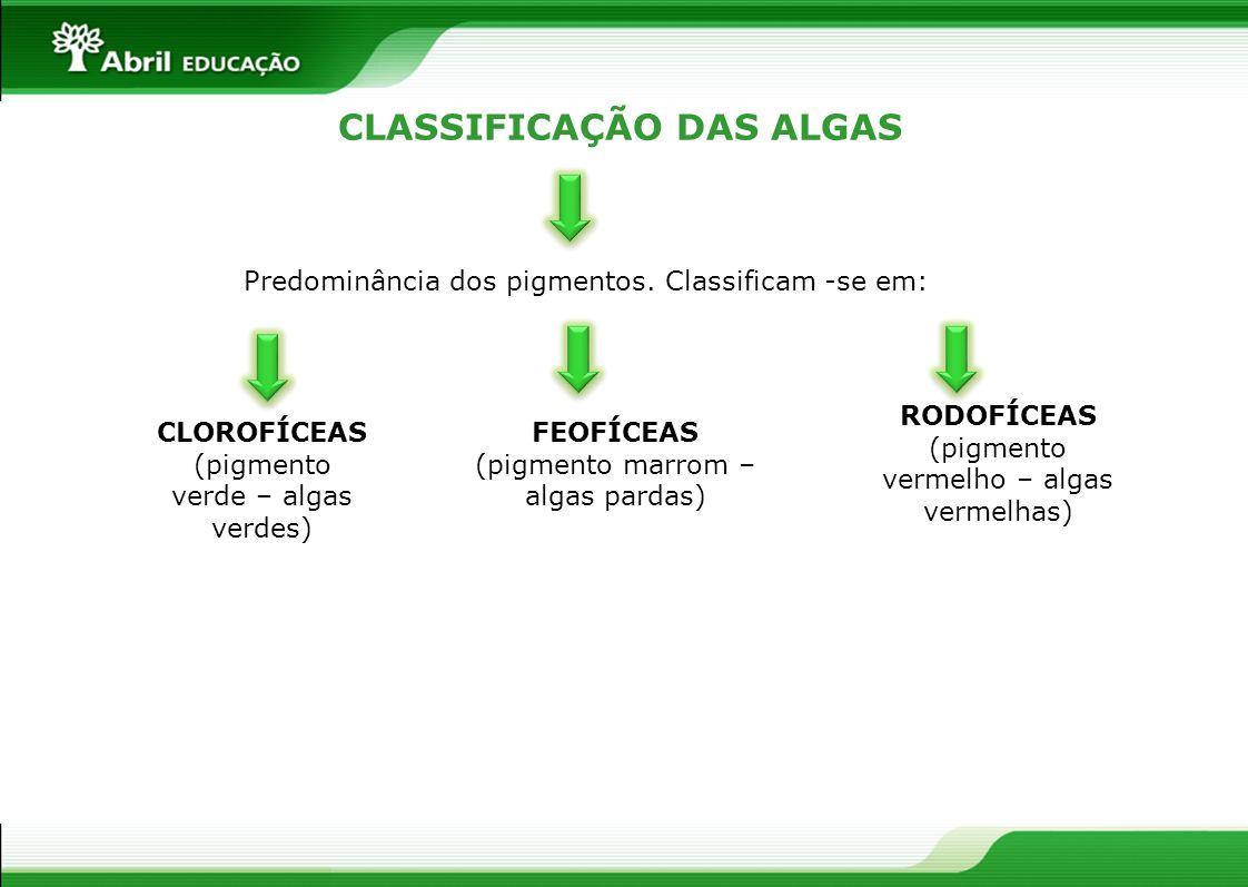 CLASSIFICAÇÃO DAS ALGAS Predominância dos pigmentos. Classificam -se em: CLOROFÍCEAS (pigmento verde – algas verdes) FEOFÍCEAS (pigmento marrom – alga