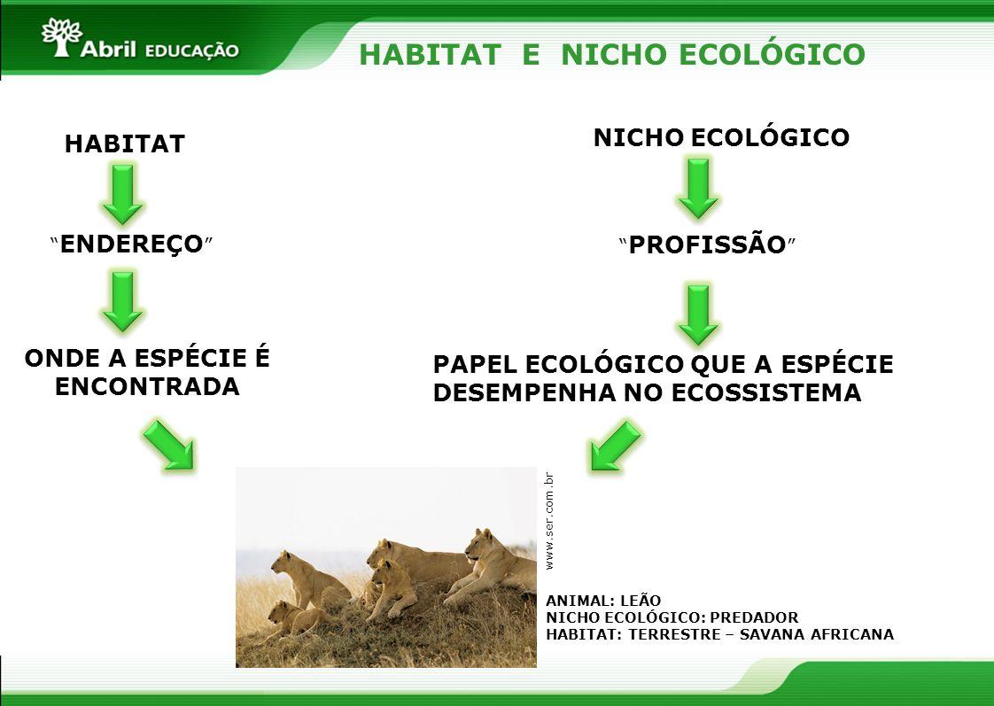 HABITAT E NICHO ECOLÓGICO HABITAT NICHO ECOLÓGICO ENDEREÇO PROFISSÃO ONDE A ESPÉCIE É ENCONTRADA PAPEL ECOLÓGICO QUE A ESPÉCIE DESEMPENHA NO ECOSSISTE