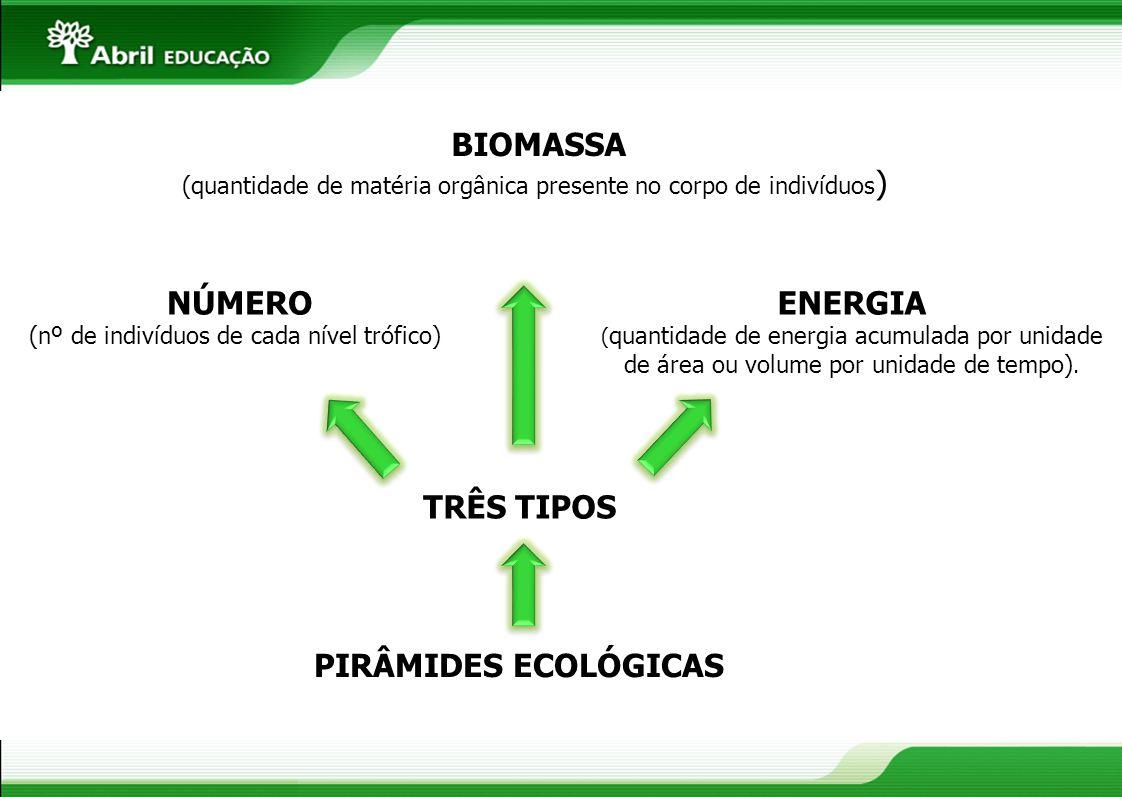 PIRÂMIDES ECOLÓGICAS TRÊS TIPOS NÚMERO (nº de indivíduos de cada nível trófico) BIOMASSA (quantidade de matéria orgânica presente no corpo de indivídu
