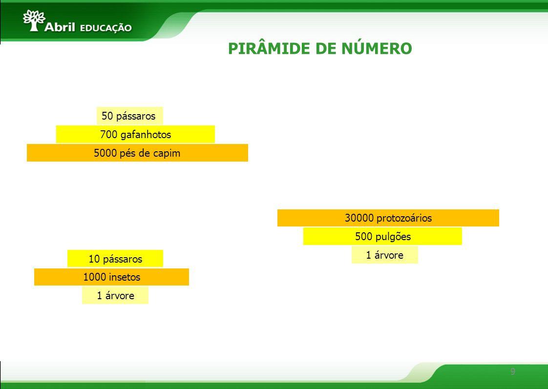 10 PIRÂMIDE DE BIOMASSA 8 toneladas de alfafas 1 tonelada de bezerro 1 pessoa 45 kg Produtor (40 000 g/m²) Decompositor (10 g/m²) Consumidor secundário (1 g/m²) Consumidor primário (4 g/m²)