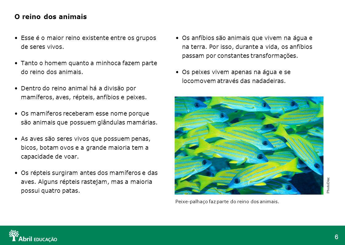 6 O reino dos animais Esse é o maior reino existente entre os grupos de seres vivos. Tanto o homem quanto a minhoca fazem parte do reino dos animais.
