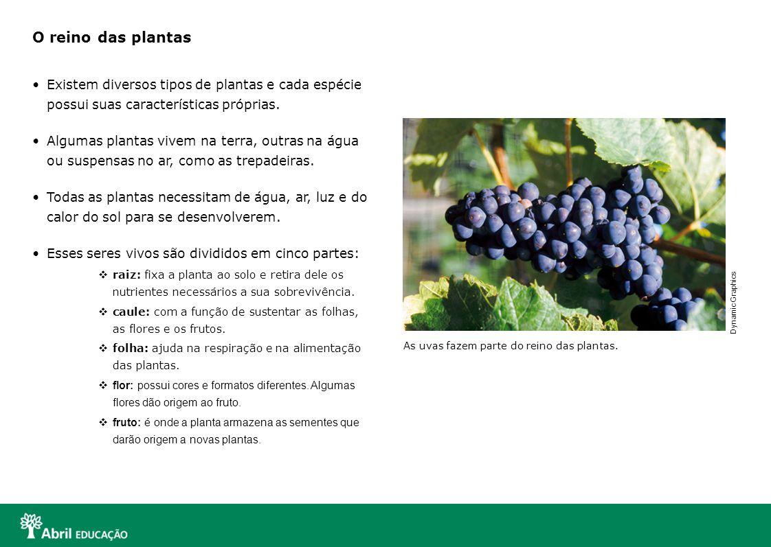 O reino das plantas Existem diversos tipos de plantas e cada espécie possui suas características próprias. Algumas plantas vivem na terra, outras na á