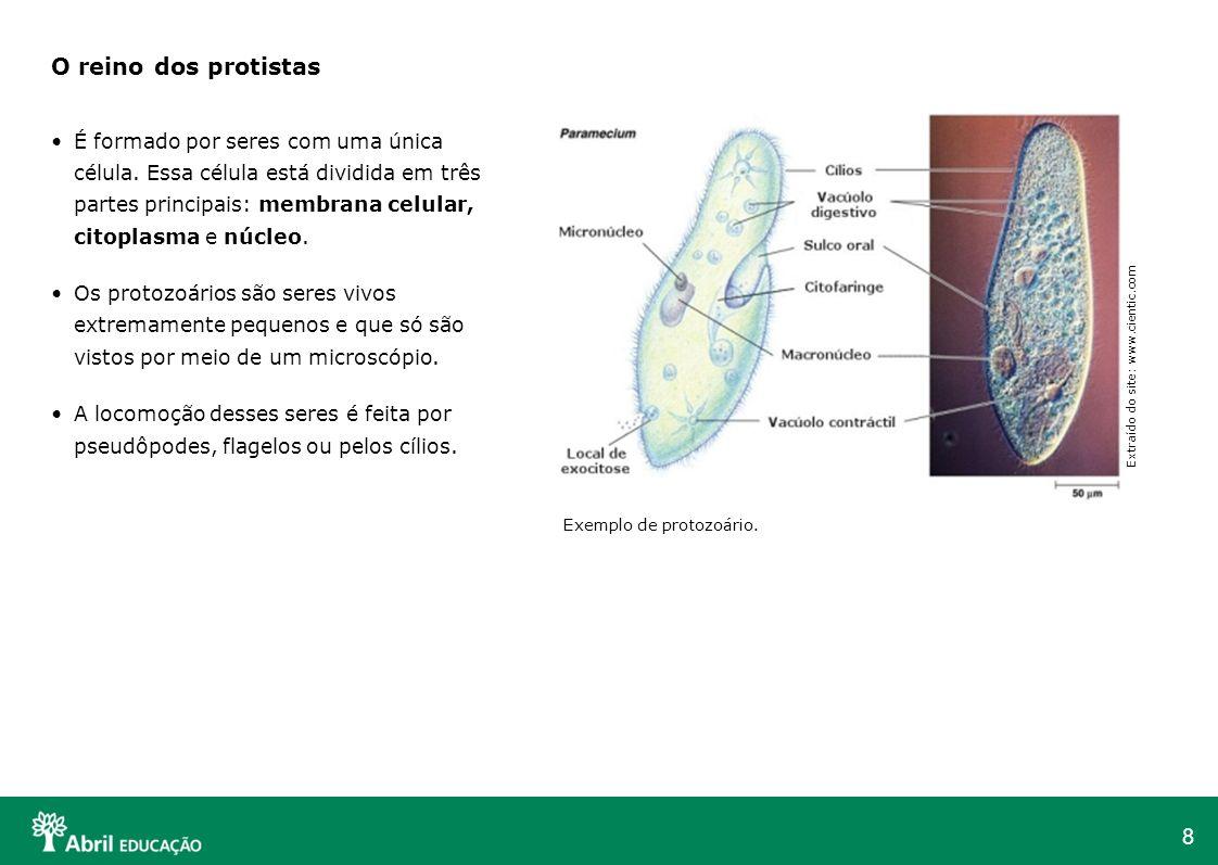 8 O reino dos protistas É formado por seres com uma única célula. Essa célula está dividida em três partes principais: membrana celular, citoplasma e