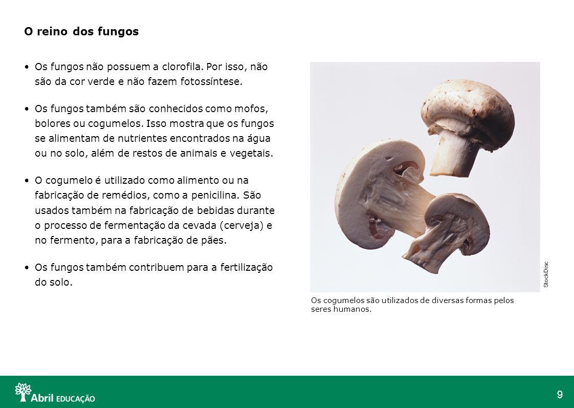 9 O reino dos fungos Os fungos não possuem a clorofila. Por isso, não são da cor verde e não fazem fotossíntese. Os fungos também são conhecidos como