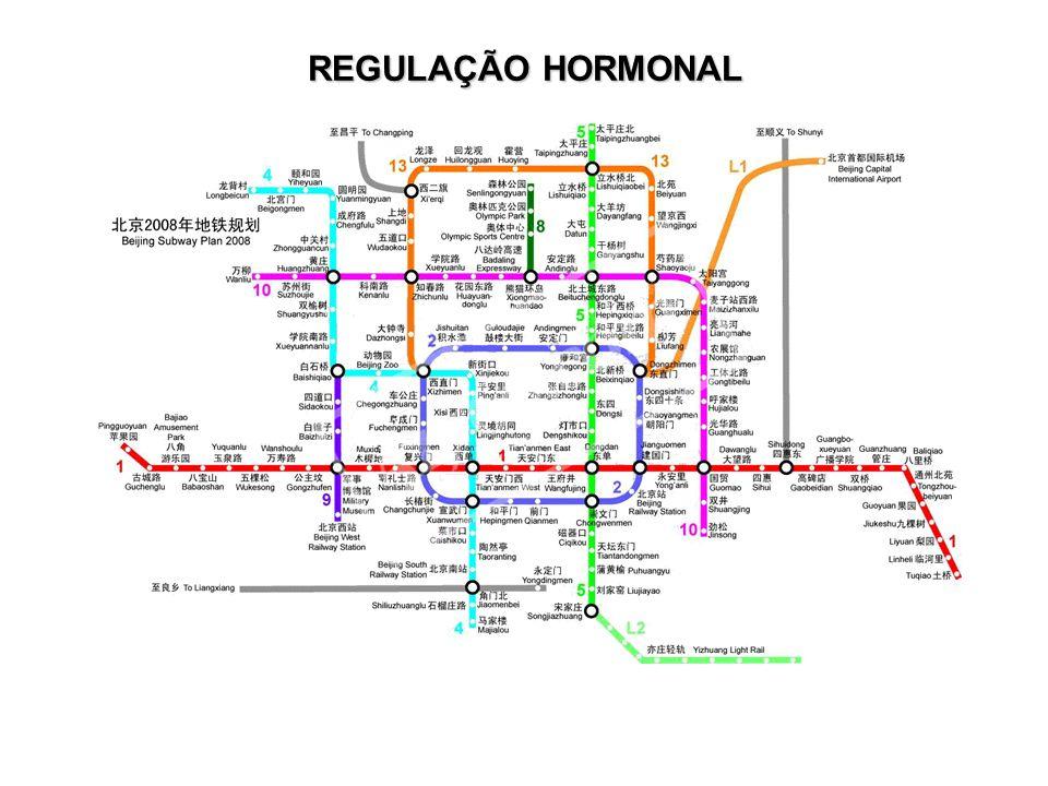 Instituto Nacional de Controle de Qualidade em Saúde 27 REGULAÇÃO HORMONAL