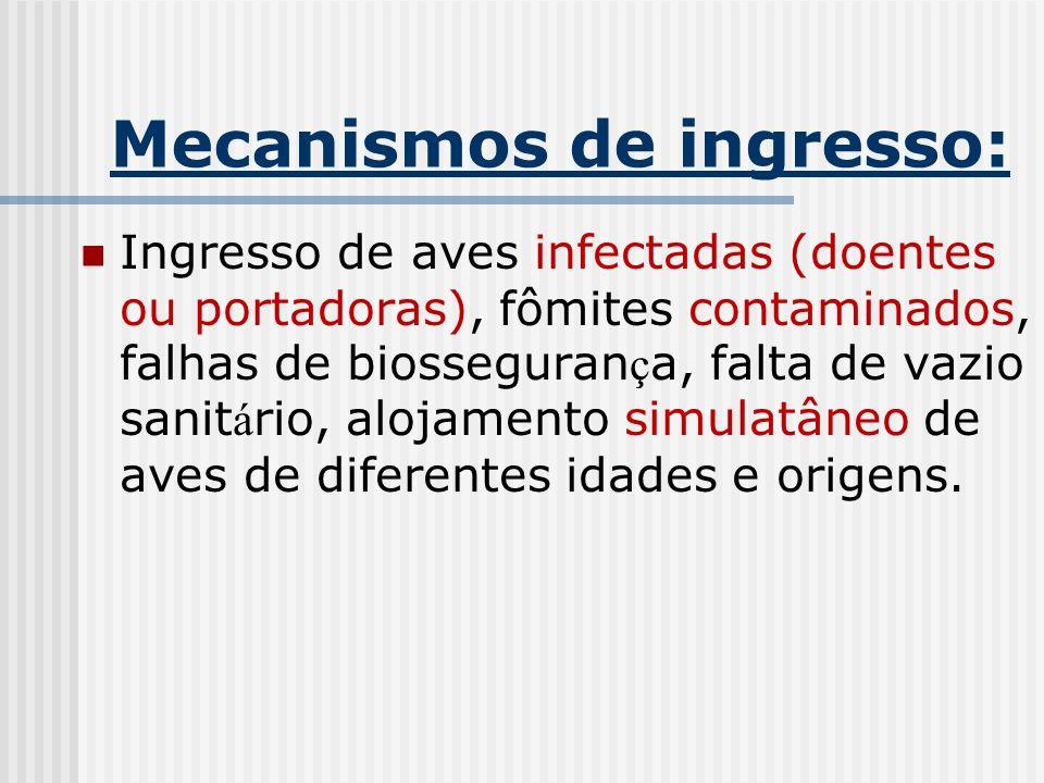 Mecanismos de ingresso: Ingresso de aves infectadas (doentes ou portadoras), fômites contaminados, falhas de biosseguran ç a, falta de vazio sanit á r