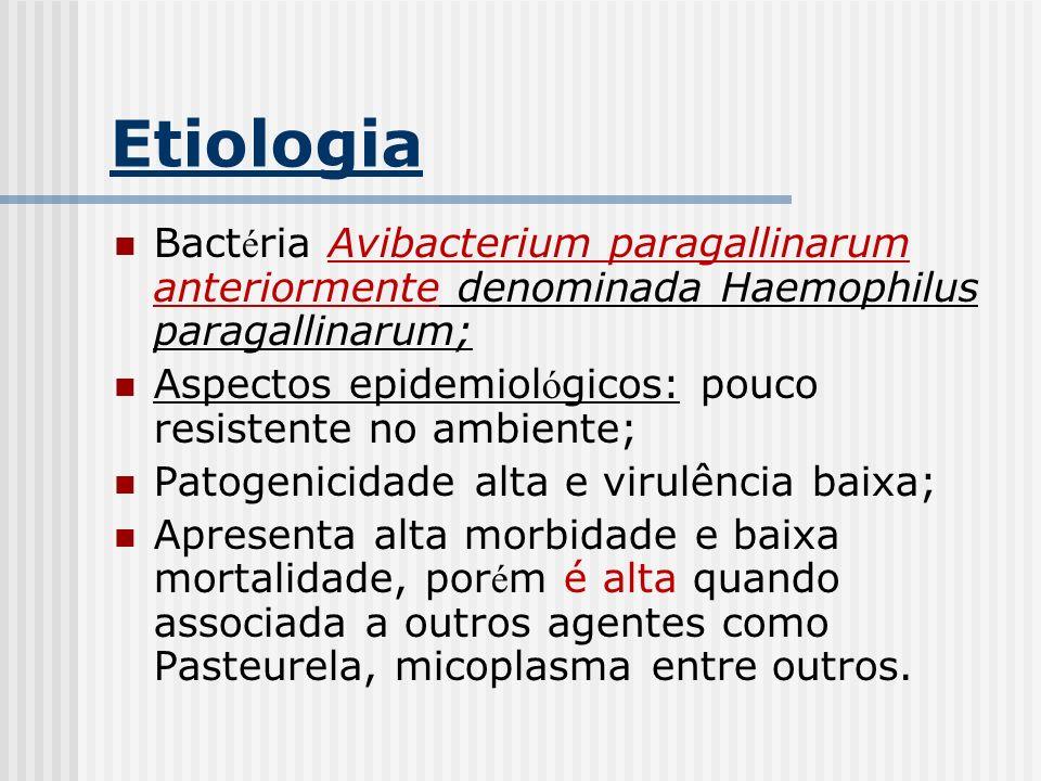 Etiologia Bact é ria Avibacterium paragallinarum anteriormente denominada Haemophilus paragallinarum; Aspectos epidemiol ó gicos: pouco resistente no