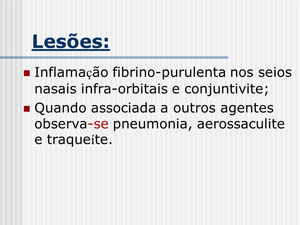 Lesões: Inflama ç ão fibrino-purulenta nos seios nasais infra-orbitais e conjuntivite; Quando associada a outros agentes observa-se pneumonia, aerossa