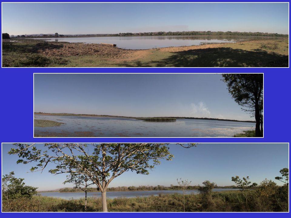 TÍTULO DO PROJETO 2: Avaliação da perda da biodiversidade aquática devido à regularização das vazões do baixo curso do rio São Francisco: Componente Ictiofauna Coordenação: Prof.