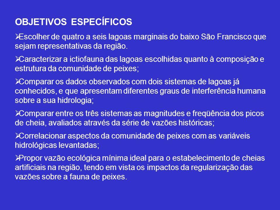 TÍTULO DO PROJETO 4: Caracterização de ictiofauna bioindicadora da vazão ecológica para o Baixo Curso do Rio São Francisco Profa.