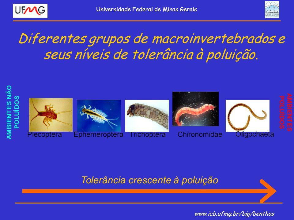 Diferentes grupos de macroinvertebrados e seus níveis de tolerância à poluição. PlecopteraEphemeropteraTrichopteraChironomidae Oligochaeta AMBIENTES N