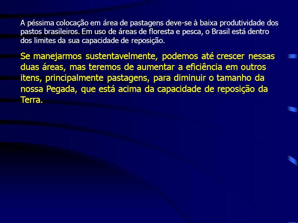 A péssima colocação em área de pastagens deve-se à baixa produtividade dos pastos brasileiros.