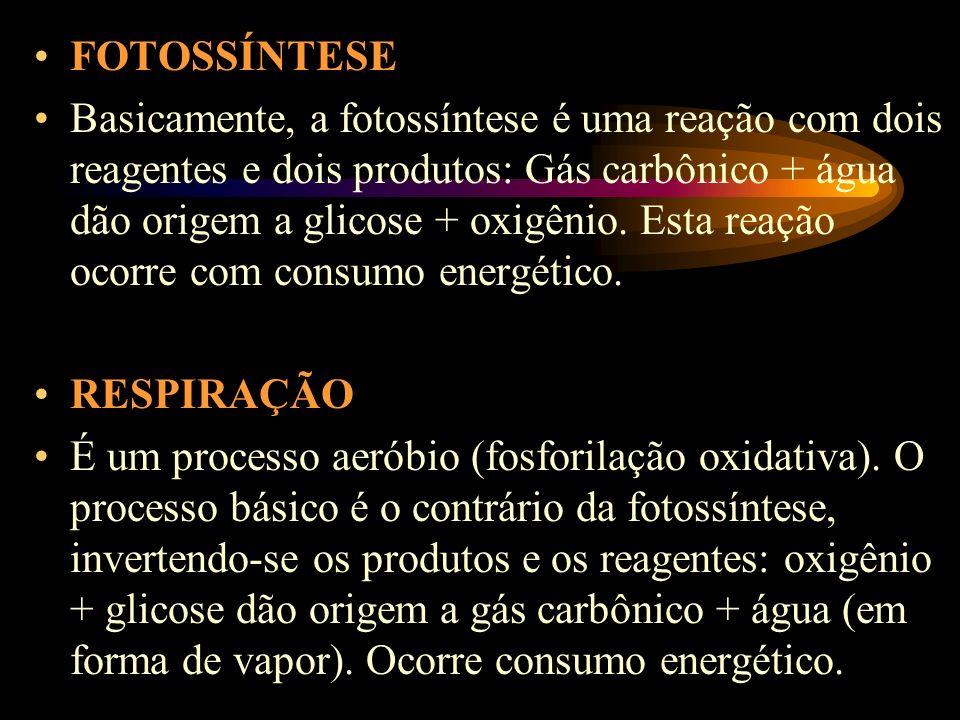 FOTOSSÍNTESE Basicamente, a fotossíntese é uma reação com dois reagentes e dois produtos: Gás carbônico + água dão origem a glicose + oxigênio.